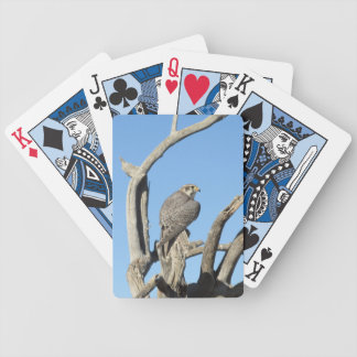 Prairie Hawk Playing Cards