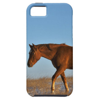 Prairie Horse iPhone 5 Cases