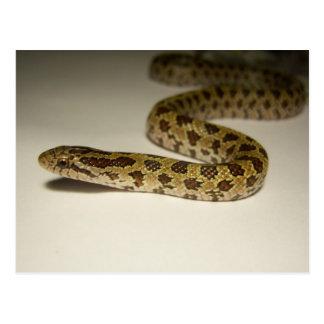 Prairie King Snake Postcard