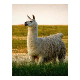 Prairie Llama Mama Letterhead