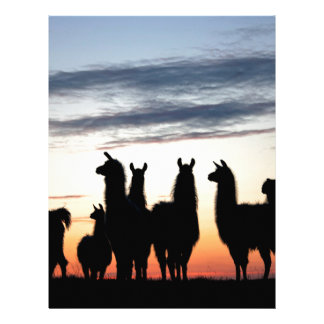Prairie Llama silhouette Letterhead Template