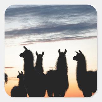 Prairie Llama silhouette Square Sticker