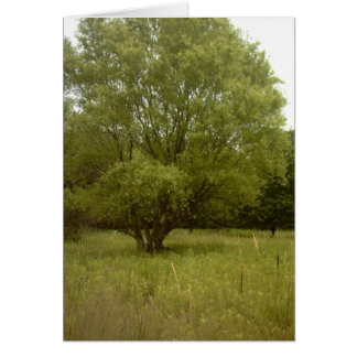 Prairie Tree Borderless Card