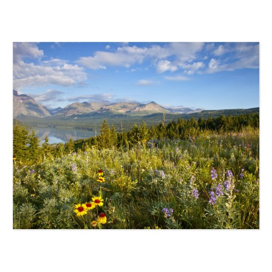 Prairie wildflowers and Lower Two Medicine Lake Postcard