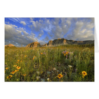 Prairie Wildflowers at Windy Creek in the Many Card