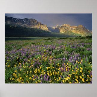 Prairie wildflowers fill meadow near Lake Poster