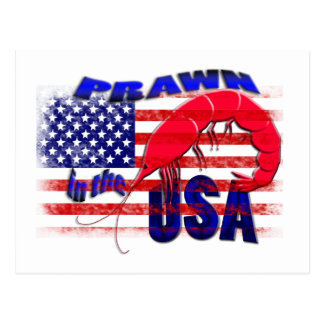prawn in the usa postcard