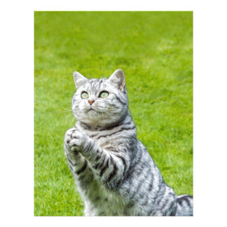Praying cat on green grass custom letterhead