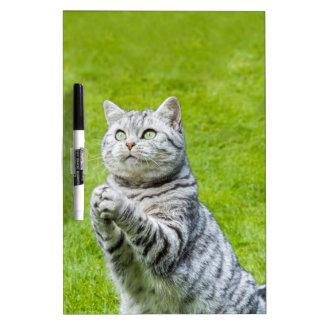 Praying cat on green grass dry erase whiteboard