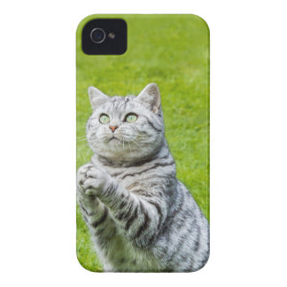 Praying cat on green grass iPhone 4 case