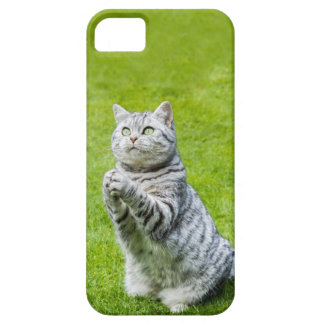 Praying cat on green grass iPhone 5 cases