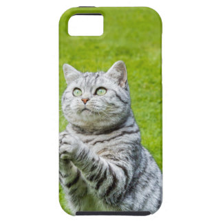Praying cat on green grass iPhone 5 covers