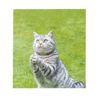 Praying cat on green grass notepad