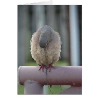 Praying Dove Card