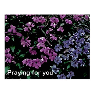 Praying For You Floral Postcard