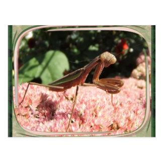 Praying Mantis 64 ~ postcard