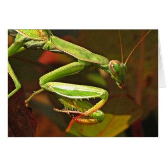 Praying Mantis Card