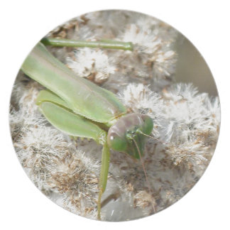 praying mantis dinner plates