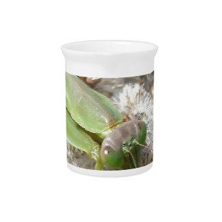 praying mantis drink pitchers
