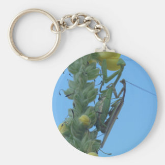 Praying Mantis Pair on Clary Sage Plant Key Chain