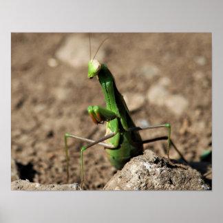 Praying Mantis Print