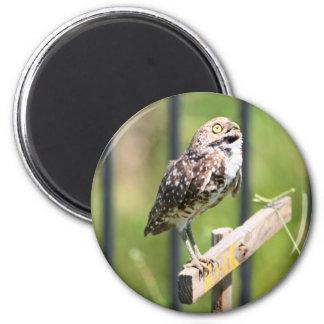 Praying Owl magnet