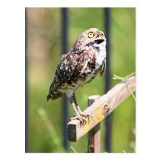 Praying Owl postcard