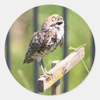 Praying Owl sticker