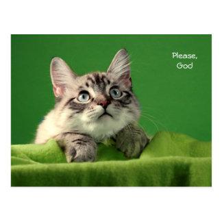 Praying Siamese Cat Post Card