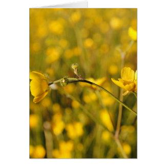 Pré d été jaune carte de vœux