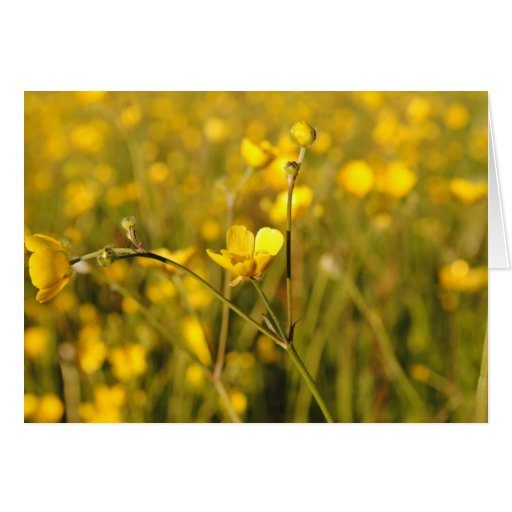 Pré d'été jaune cartes de vœux