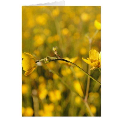 Pré d'été jaune carte de vœux