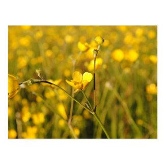 Pré d'été jaune cartes postales