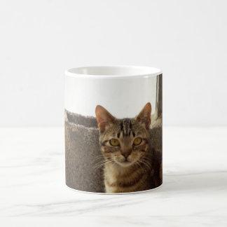Precious cat Cups