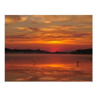 Precious morning - Rinyaszentkiraly, Hungary 2008 Postcard