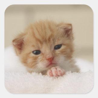Precious sweet little kitten stickers
