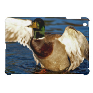 Preening Mallard Duck Wildlife Photo Cover iPad Mini Case