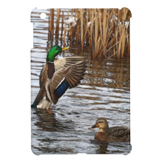 Preening Mallard Duck Wildlife Photo iPad Case