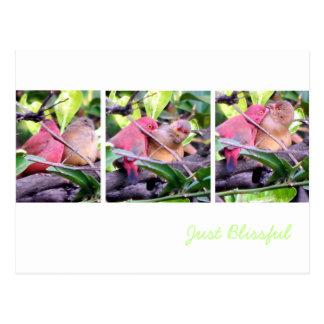 Preening Robins Postcard