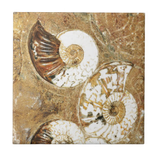 Prehistoric background with fossil shells tile