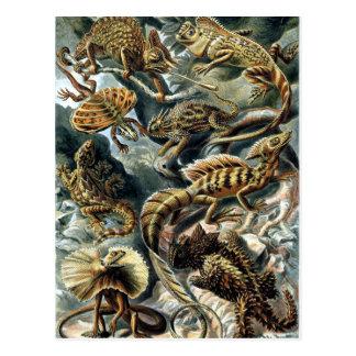 Prehistoric Lizards Postcard