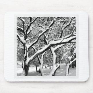 Première neige Manzanita Tapis De Souris