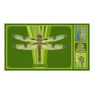 Premium Missouri Dragonfly Photo Print