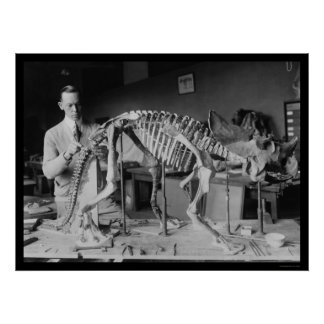 Preparing a Baby Dinosaur Skeleton 1921 Poster