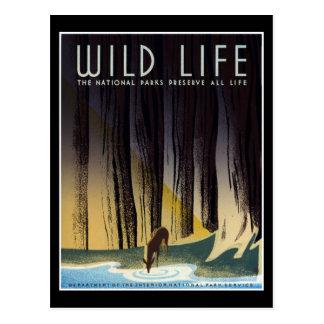 Preserve All Life Postcard