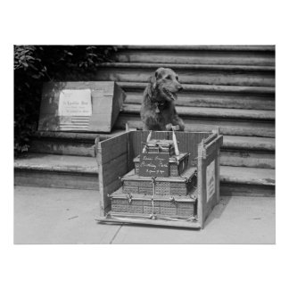 President Harding's Airedale Terrier, 1922 Poster