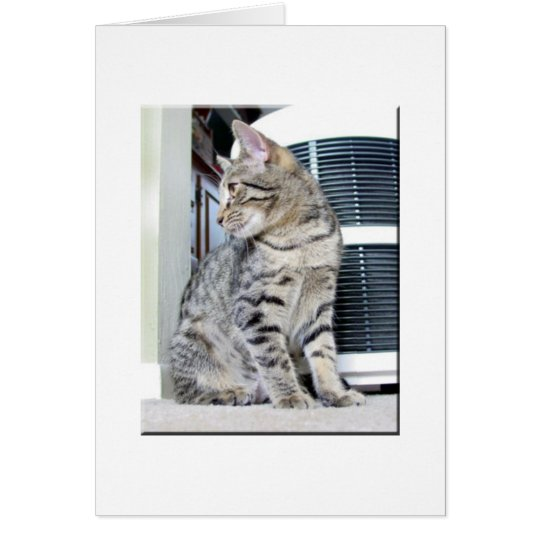 Pretty Bengal Baby Card
