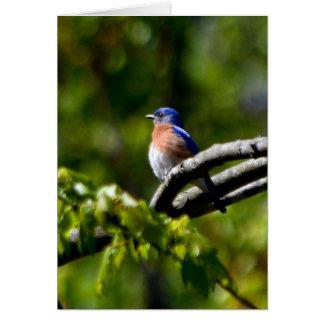 Pretty Bird! Send a Smile Card