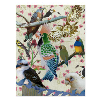 Pretty Birdies Postcard