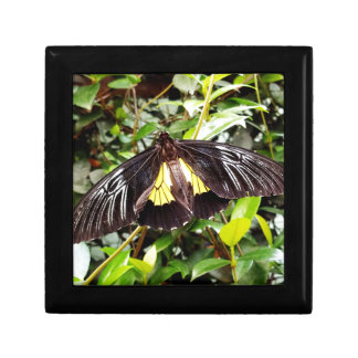 pretty black yellow butterfly photograph gift box